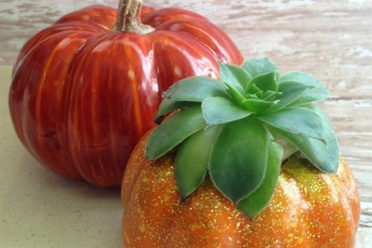 DIY Home Decor Idea Pumpkin Succulent Planter