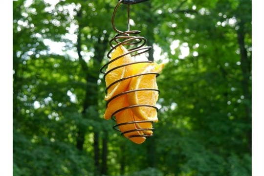 Easy DIY bird feeder made from coiled wire!