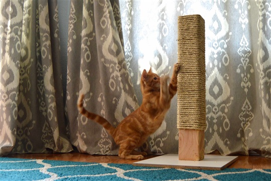 Rope Scratching Post