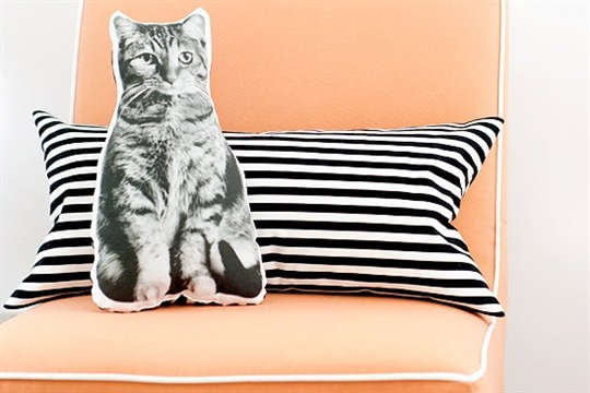 Pet Pillows (or This Is What Crazy Looks Like)